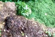 Garden Preping