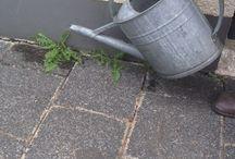 Garten Unkrautvernichter