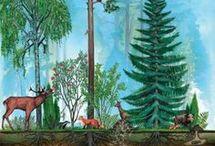 Ylli metsä