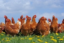 Get Fundraising / Our dedicated group of BHWT volunteers and staff who raise valuable funds so that more hens leave their cages behind & see a free range retirement.   https://www.justgiving.com/BHWTgoodeggs