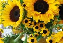I Loooove Sunflowers!!