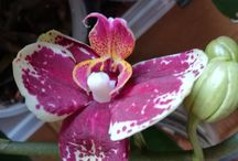 Le mie orchidee!!!!!!!!!!!!