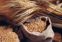 Wheat free/ dairy free ideas
