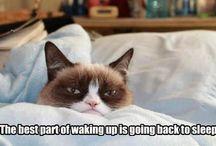 We Love Grumpy Cat