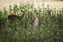 photo animals
