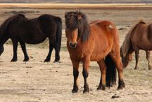 Caballos / Todo sobre caballos: las mejores fotografías, todo su cuidado, productos para caballos, potros, etc.
