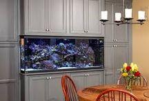 Kennys fish tank