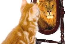 Járasd csúcsra az önbizalmad!