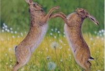 Hare and  there. / Bunnies, bunnies, bunnies. / by Barbara Richard