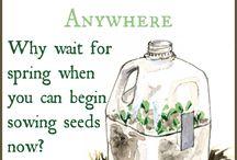 Grow the love, Baby Seedlings