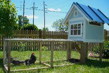 Home ~ Backyard Animals / by Karen Long