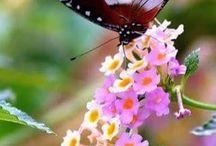 Pillangók,és más érdekességek.