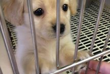 ANIMALS ARE ADORABLE  / So adorable , extremely cute, and that puppy eyes tho