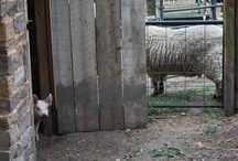 My Farm - the art farm / my home, my studio, my farm and art, my art farm.