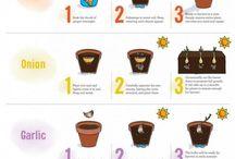 nasz ogródek - pomysły
