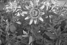 fotografía / blanco y negro y de color