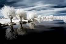 Photography-Infrared / by Shannon Lewis