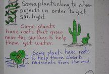Adaptations: Plants