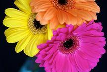 FLOWERS, SHRUBS, & PLANTS / by Brandy Hulmston