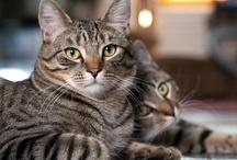 Cats & Kittens / by kristennichols