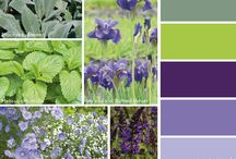 Colours in garden - combinations