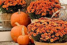 Fall Porch Decor Ideas 2016 / Starting to think about Fall decorating. Trying to get some ideas for our front porch this year.