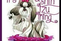 Shih Tzu dogs & other cute dogs / by Jennifer Friedman