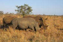 ♪ Animals ♫ / Wild animals in Kruger National Park in South Africa