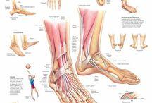 Piede Anatomia