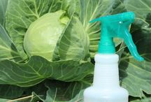 Homemade insect spray