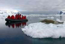 Antarctica / Our Classic Antarctica birding and wildlife cruise is a 'must' for every nature enthusiast, and we guarantee that you will return enriched by this experience of a lifetime! During this incredible journey we will explore the remote Falkland Islands, South Georgia, South Shetlands and finally, the Antarctic Peninsula. Where we will marvel at some of the world's last truly pristine wildernesses, be treated to spectacular vistas, hauntingly beautiful icebergs and the planet's greatest concentrations