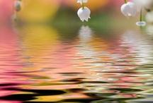 Poetic flowers