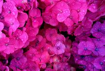 ▶ POTPOURRI | Flowerbomb ◀ / florals. flowers. petals. blossoms. virtual garden. roses. peonies. hydrangeas. flower beds. blooming. eternal spring. / by Catharine Désolée