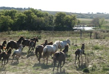 Home Decor... now that's cool.. horses running in paradise... facebook.. Sally Tvedt / by Sally Tvedt