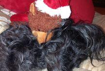 Max und Lilu / Das Leben meiner Hunde