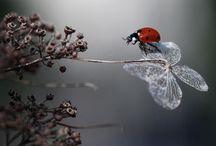 Images  / by Cristina Voicu