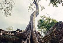 Tree of life / by Regina Mac