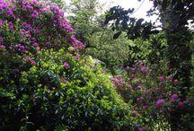 Kouzlo starých zahrad