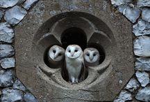 Kiara's OWL OBSESSION / by Lori Decker