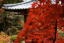 Japanese Interior, exterior and garden / Everything from traditional zen gardens to ultra modern arcitucture