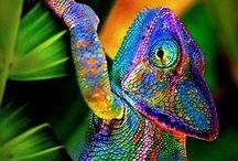 χρωμα
