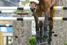the horse world