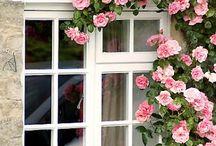 Window - Art, ®™