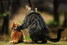 Kitties / by Elizabeth Holder Photography