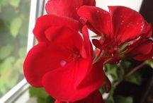 BlomsterAmok / Vild med blomster for tiden.