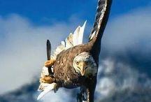 uccelli e volattili