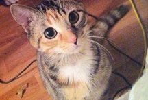 Funny cats / Cats with funny acts