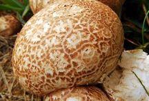 Gombák és más érdekes növények
