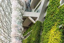 Vegetal walls