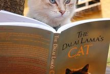 Feline good - Cats reading Hay House books! / Adorable pics of readers' cats posing with Hay House books to celebrate the release of David Michie's novel The Art of Purring (http://hayhou.se/Purring)